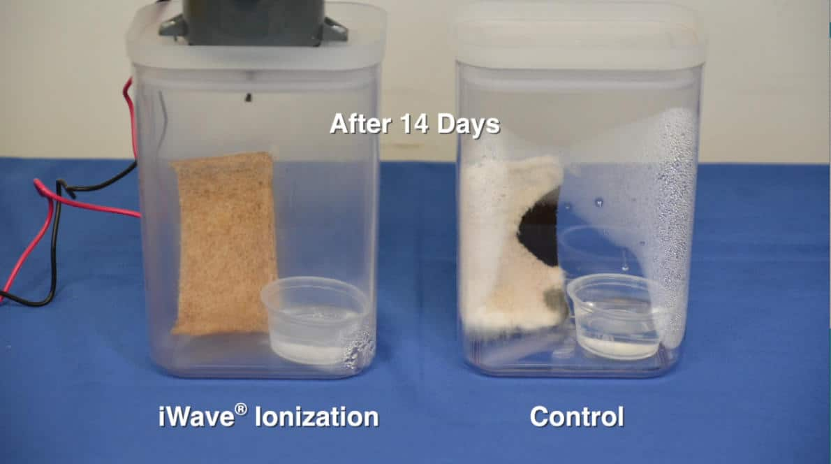 "A picture of two sealed containers, each with a slice of bread and a small liquid cup inside. The container on the left has an iWave Air Purifier attached to the top, and a clean looking piece of bread inside. The container on the right (without an air purifier attached) has a very moldy piece of bread inside. Text inside the image reads ""After 14 Days""."